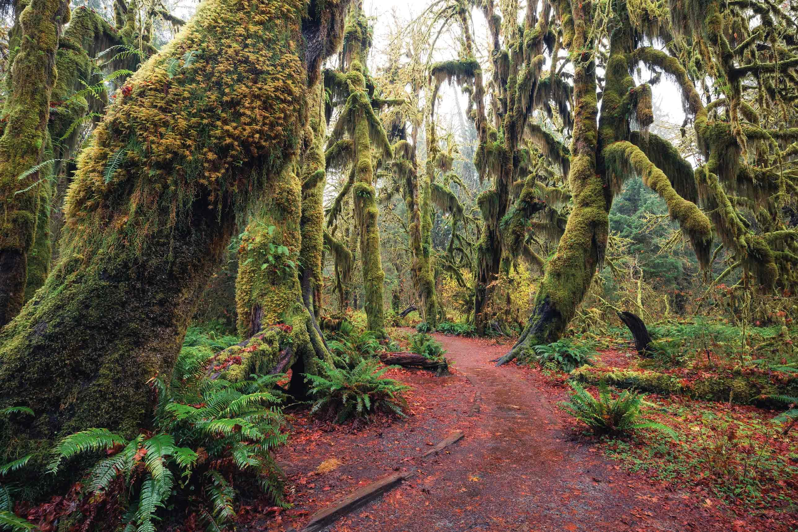 Hoh Forest