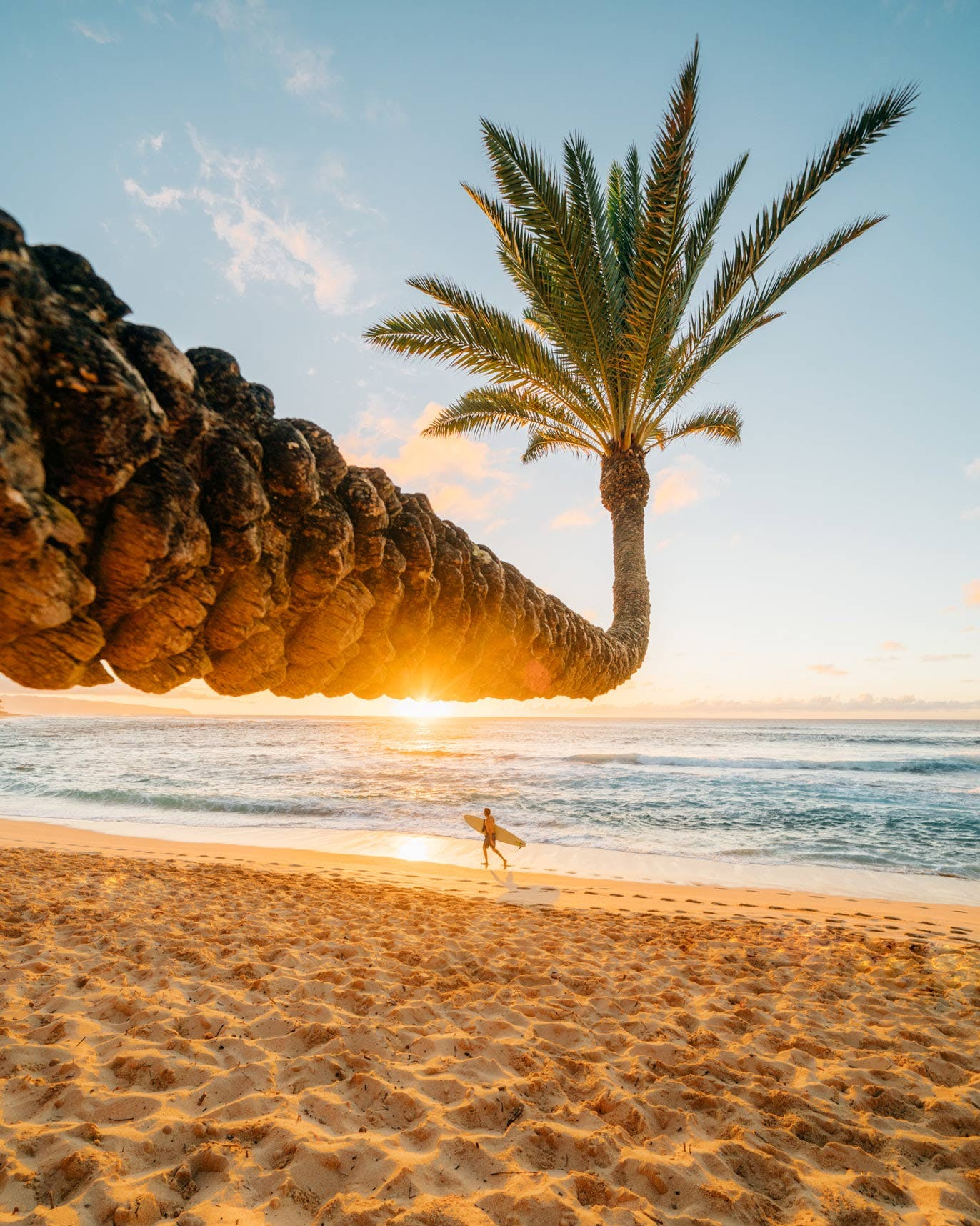 Sunset Beach Crooked Palm Tree