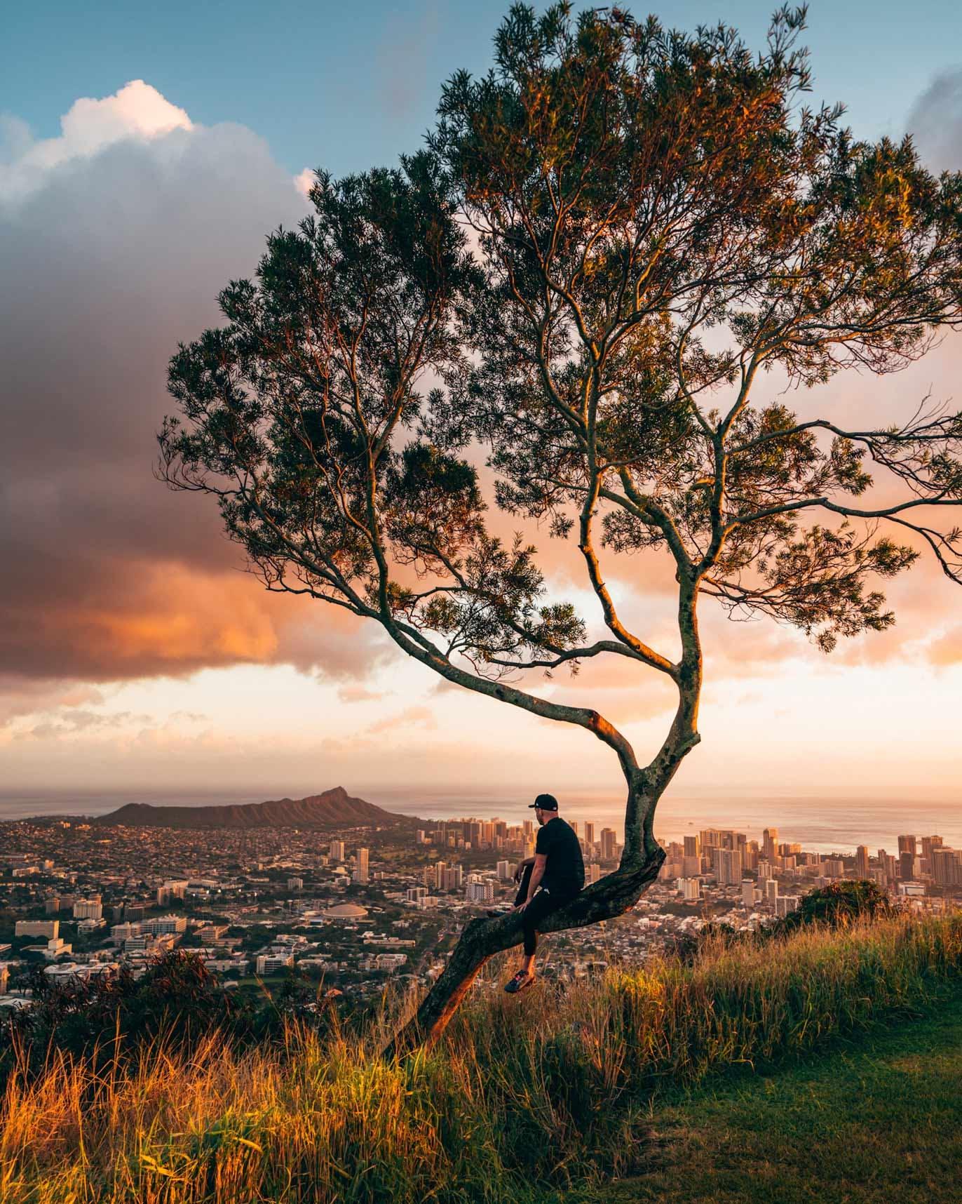 Tantalus Lookout Tree view of Diamond Head & Downtown Honolulu