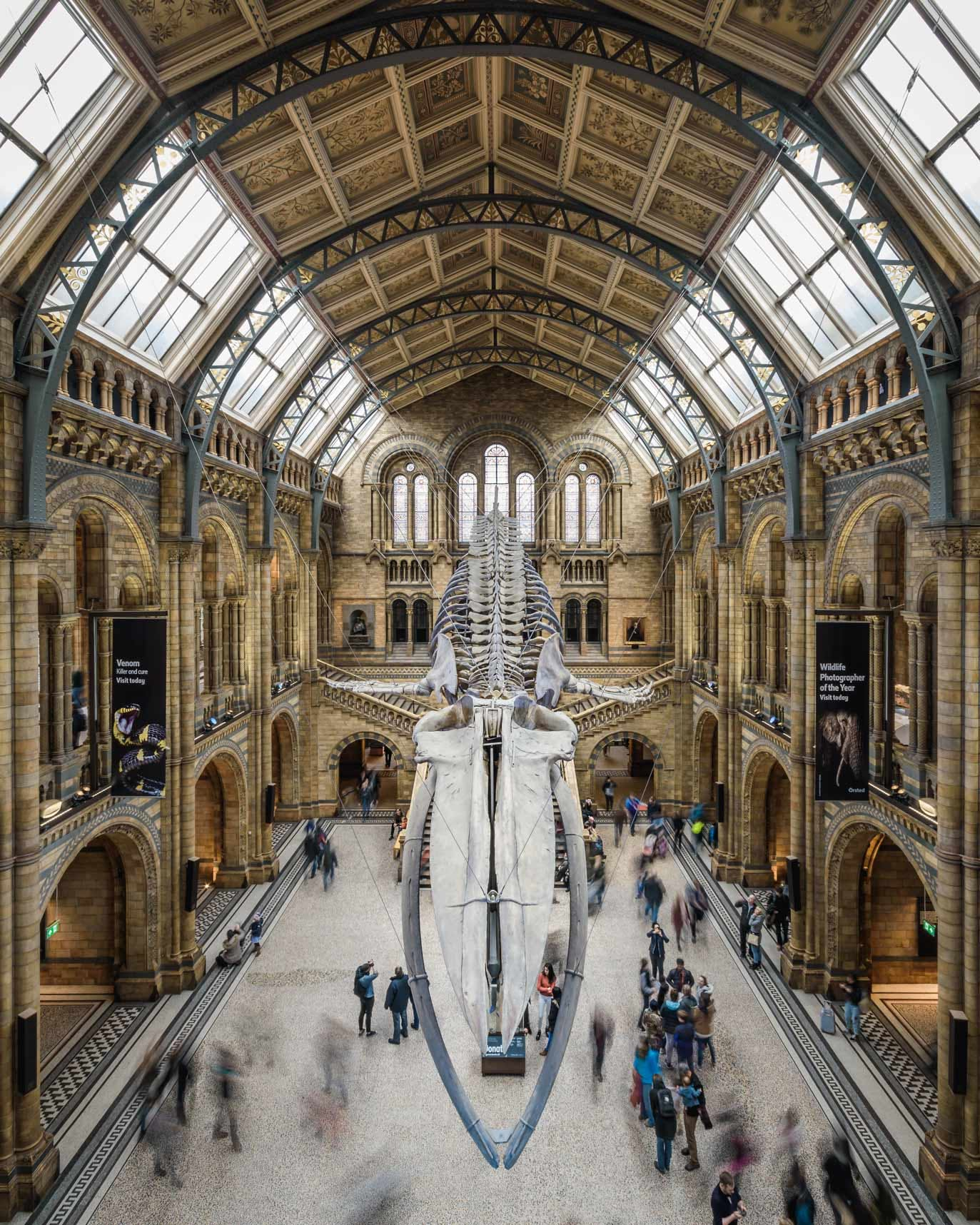 Hope the Blue Whale Skeleton, Hintze Hall at Natural History Museum