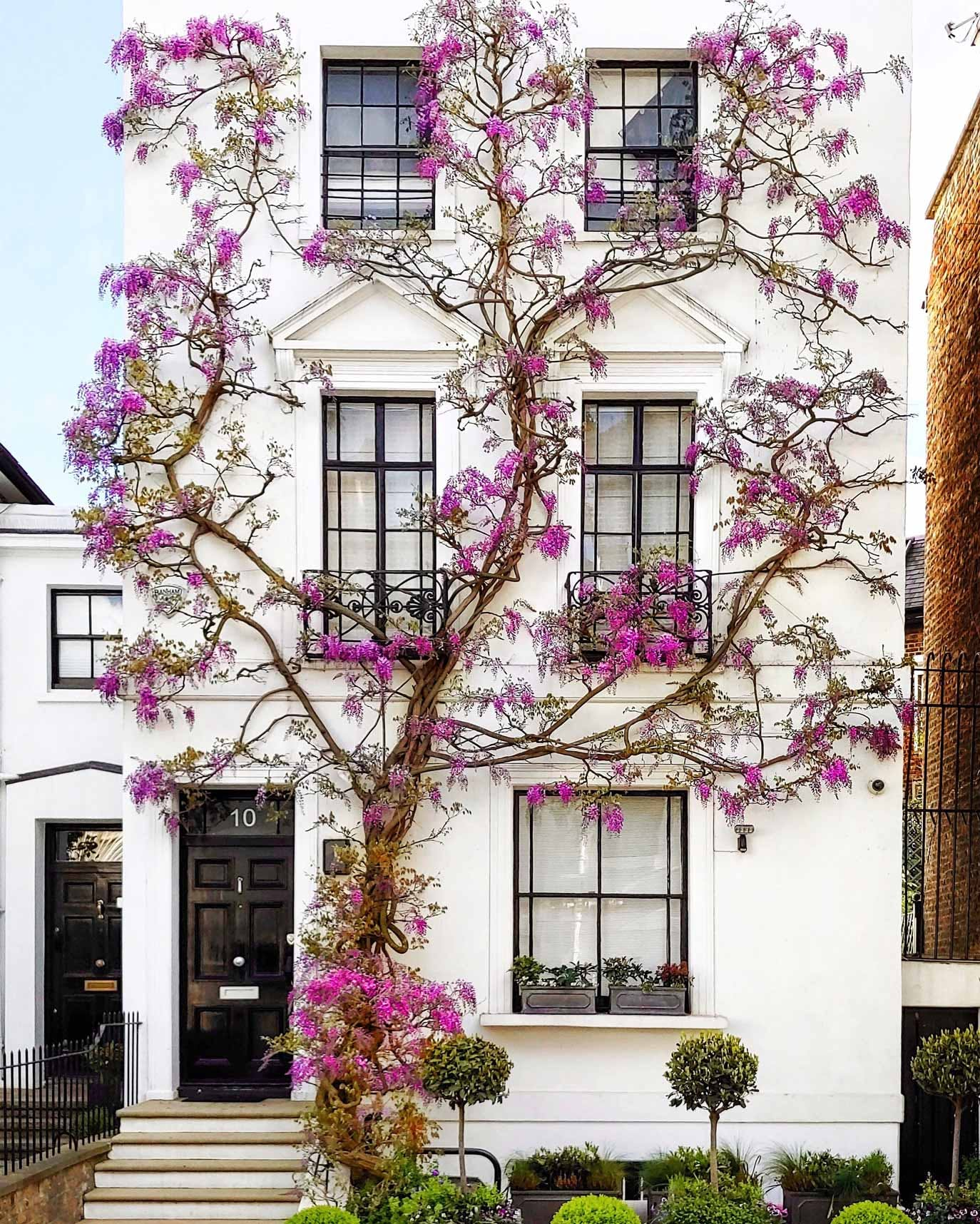 Vine-Covered Wisteria House on Canning Place
