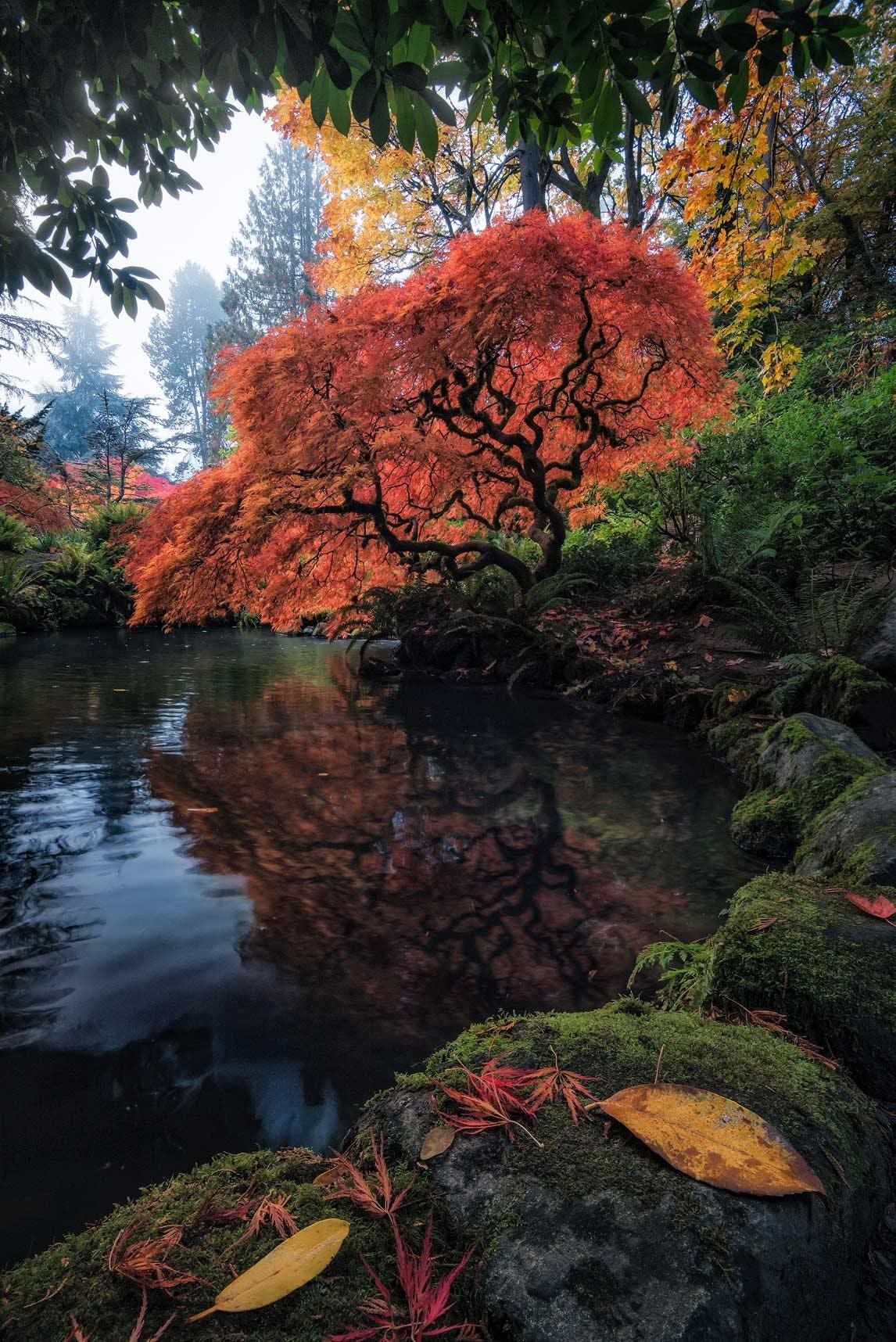 Kubota Gardens Pond & Red Tree