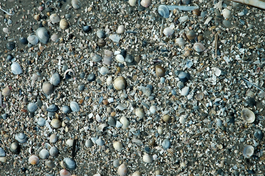 Muschelmeer