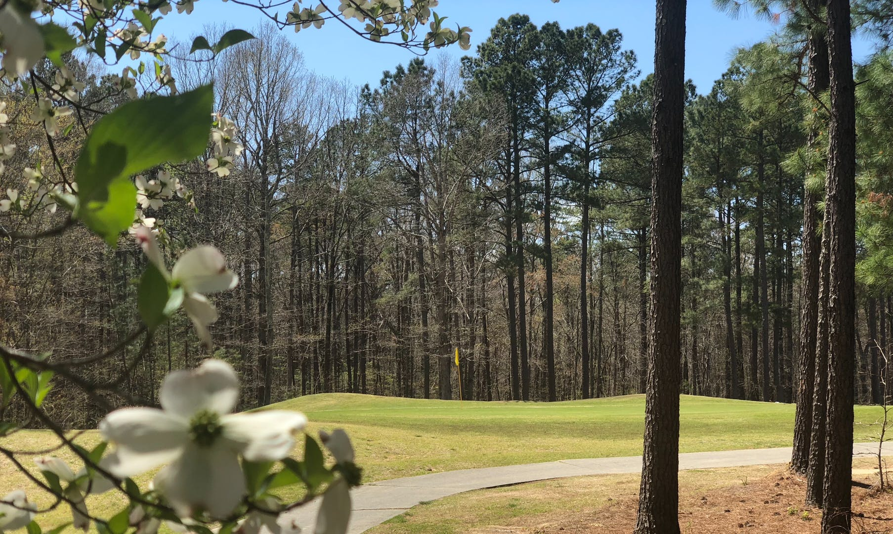 A green at Falls Village Golf Club with a flowering tree in the foreground.