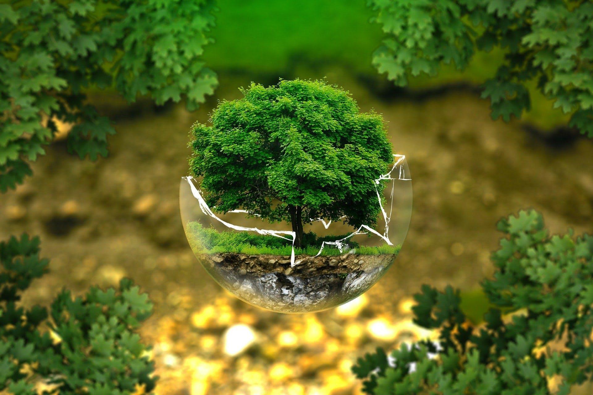 Ein Baum wächst innerhalb einer zerbrochenen Glaskugel.