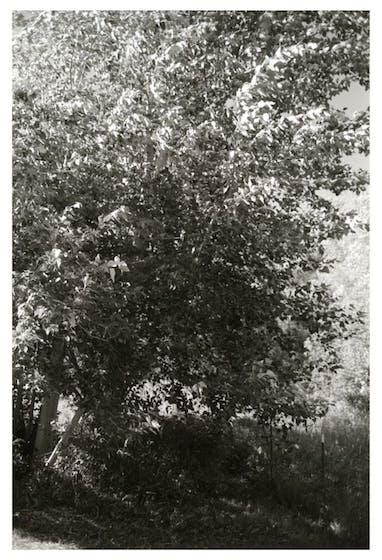 Pine Valley Oregon, Robert Adams, 2003