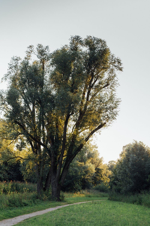Amsterdamse Bos - Sofia Brandes