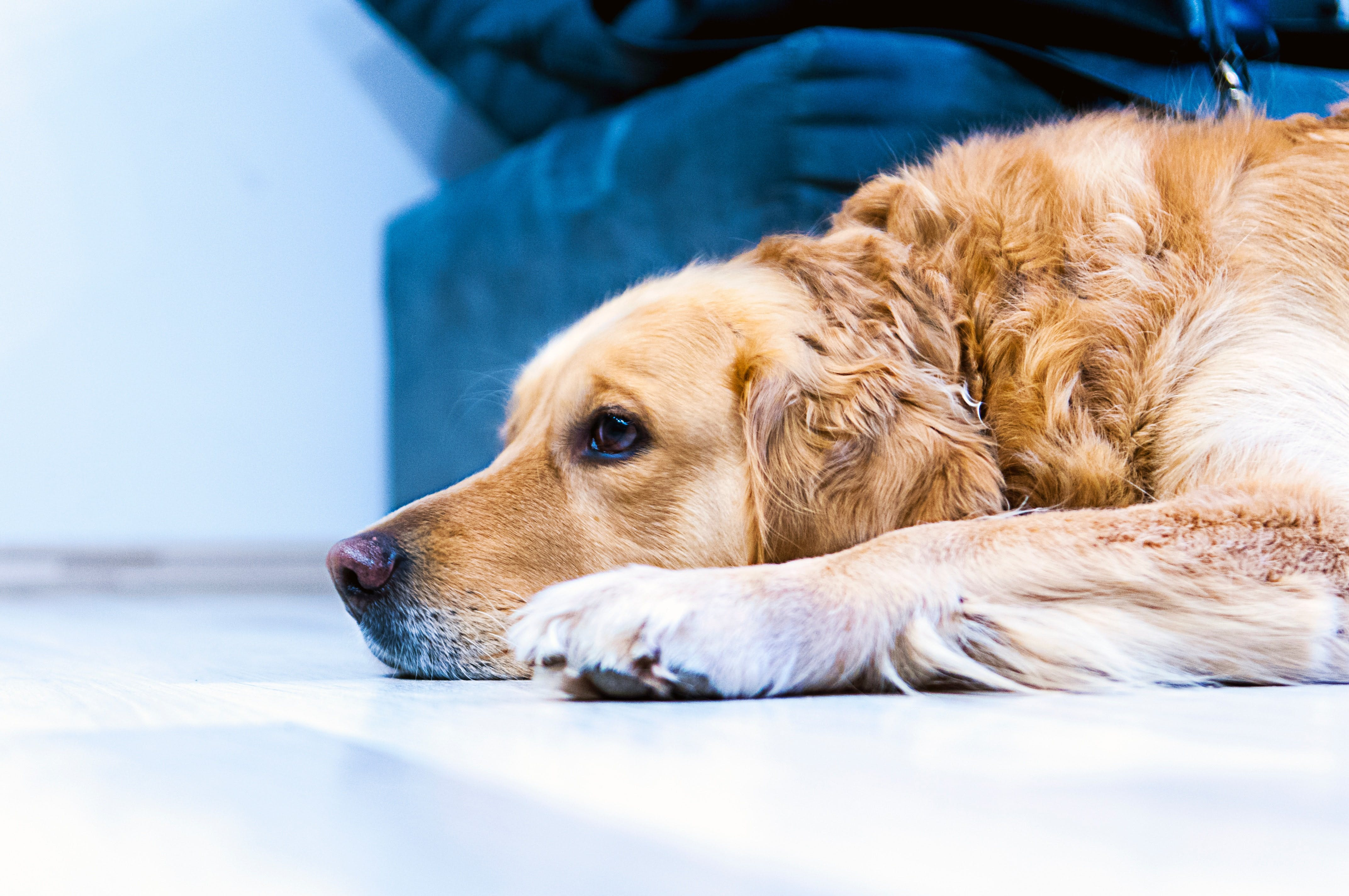 Food Poisoning in Dogs: What You Need to Know | FetchMyVet