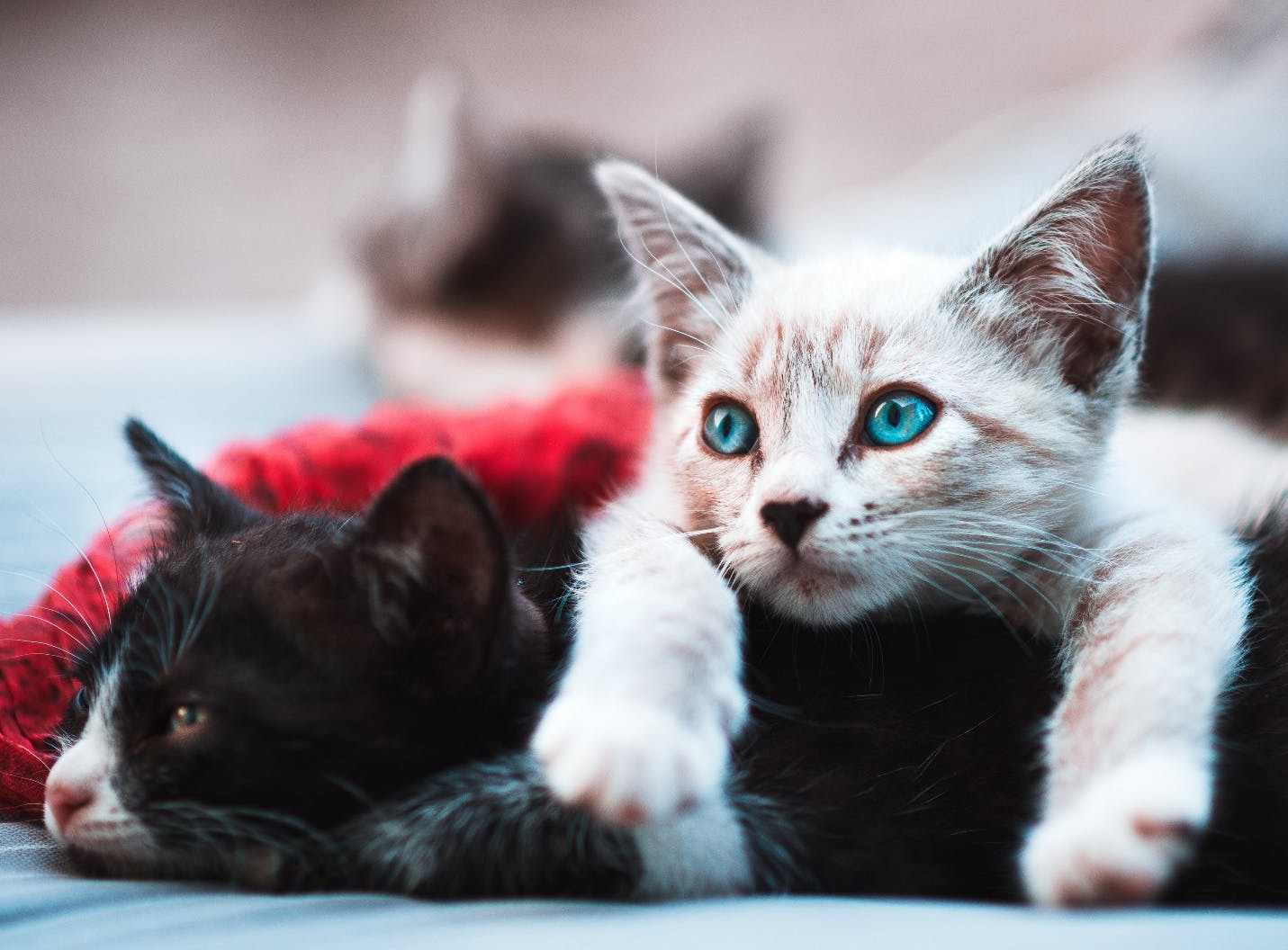 When To Vaccinate Your Kitten: The Essential Guide