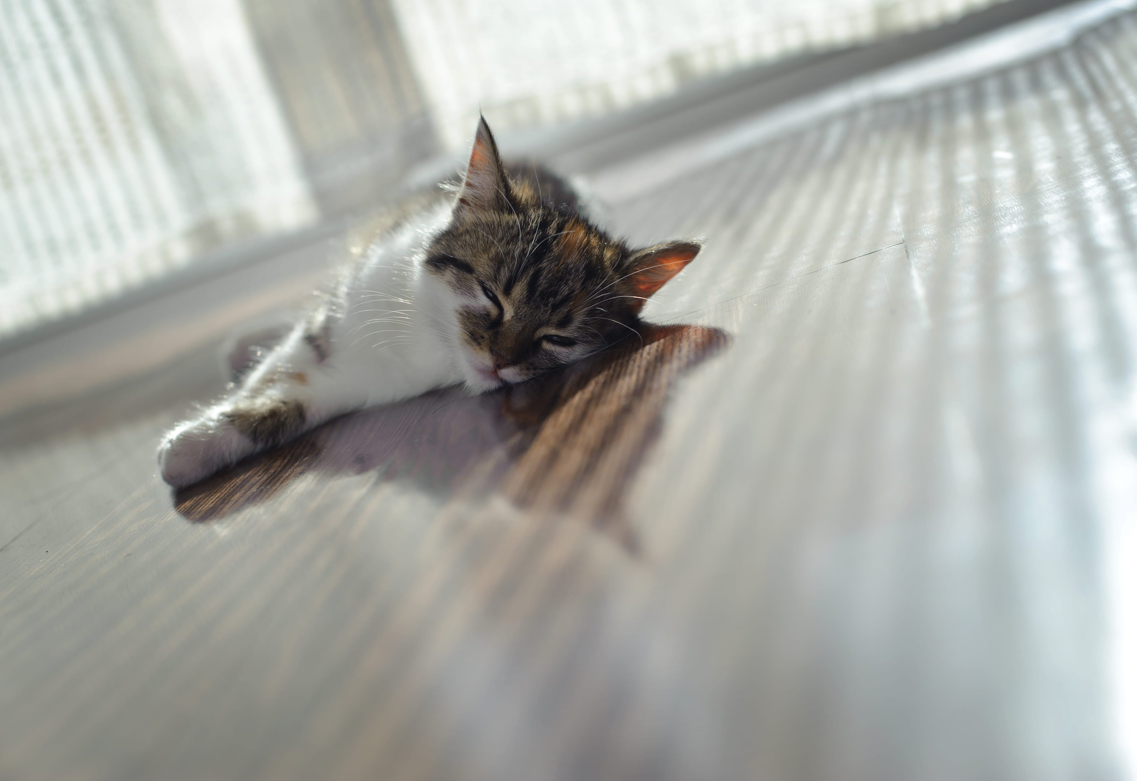 Vaccination Guidelines: What are the Core Vaccines for Cats?