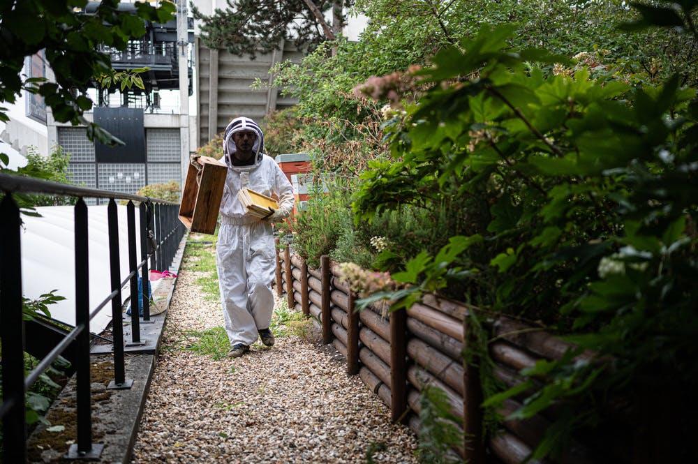 The Roland-Garros bees