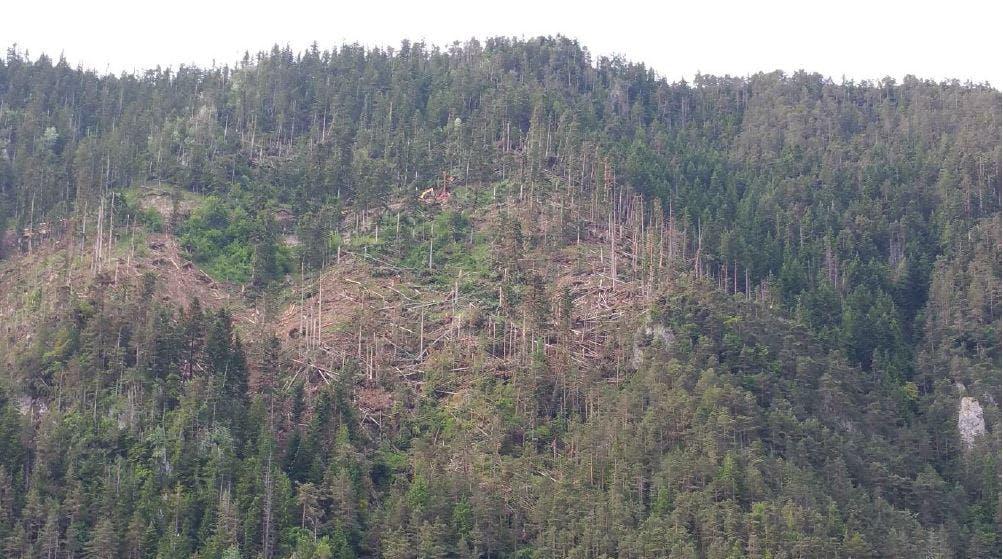 Destruction du massif liée à la tempête de mars 2015
