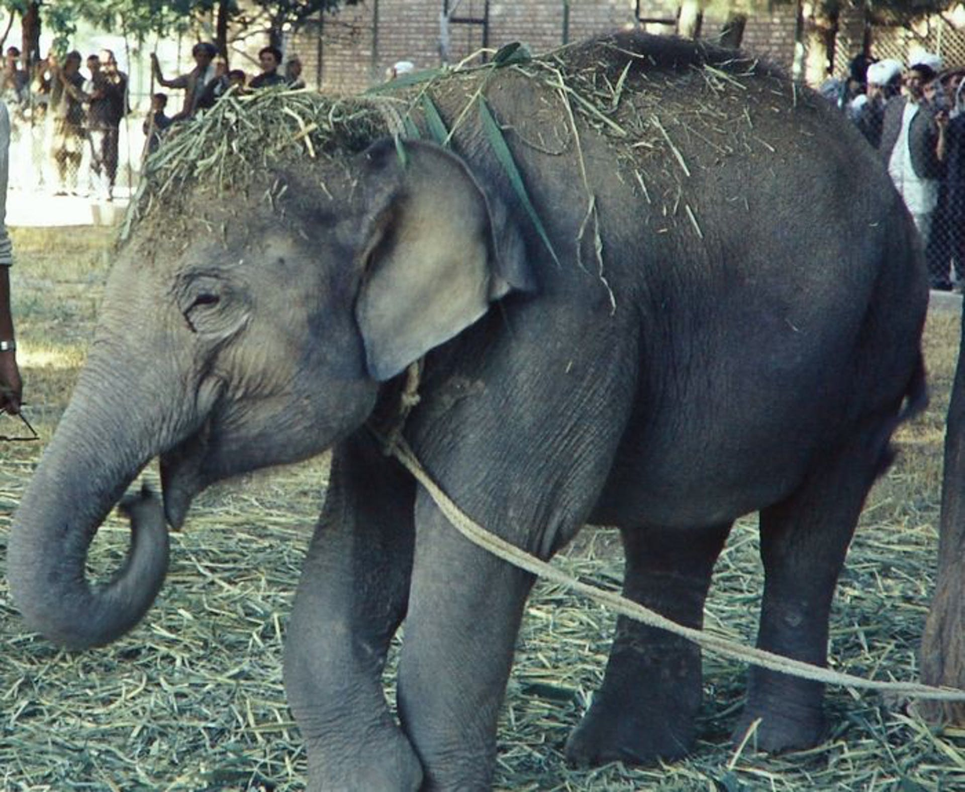 A rare colour photograph of young Hathi in her enclosure. Courtesy: Gunther Nogge