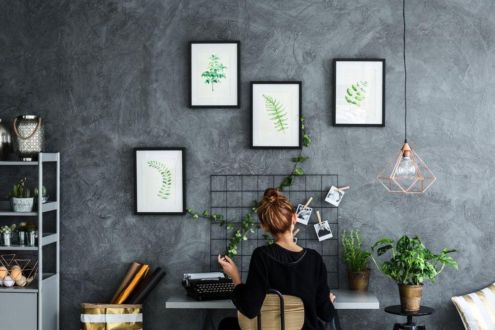plantes bureau