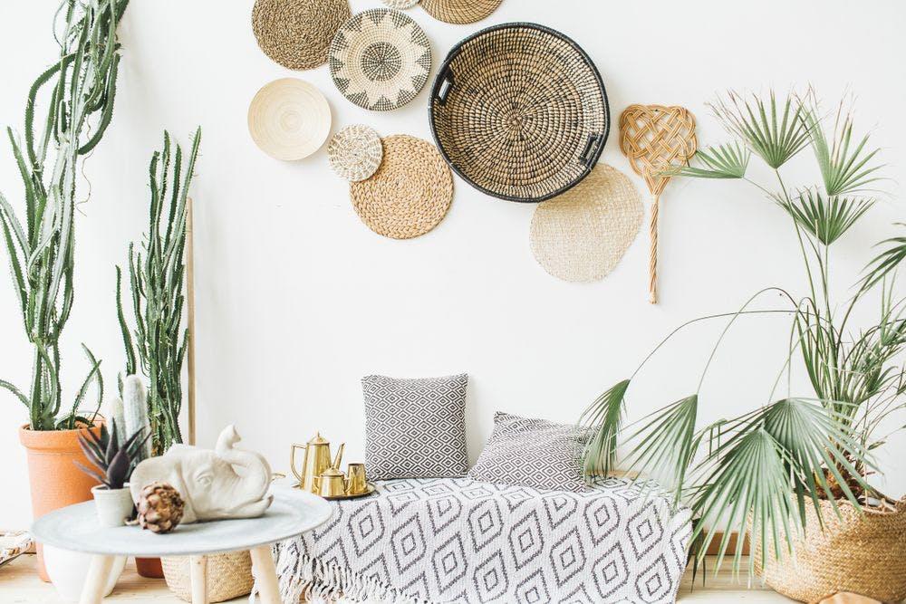 plantes dans un intérieur