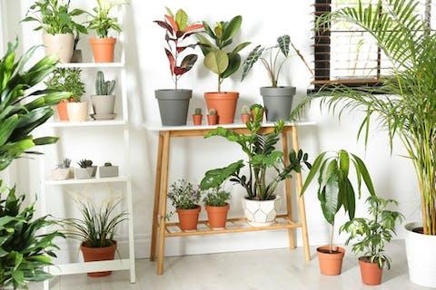 Des plantes d'intérieur pour embellir votre logement