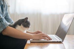 Votre locataire peut-il exercer une activité professionnelle à son domicile ?