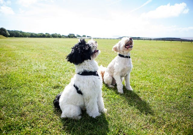 620d7fb384347d78aac8e939ff47976989940778 110 best walks for your dog