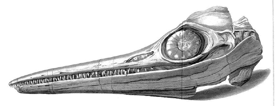 Ichthyosaur skull discovered by Mary Anning in 1811..
