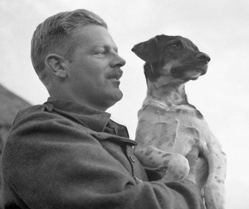 Dogs in World War 2