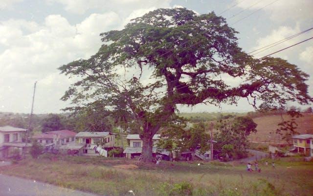 Retrench Estate, Trinidad