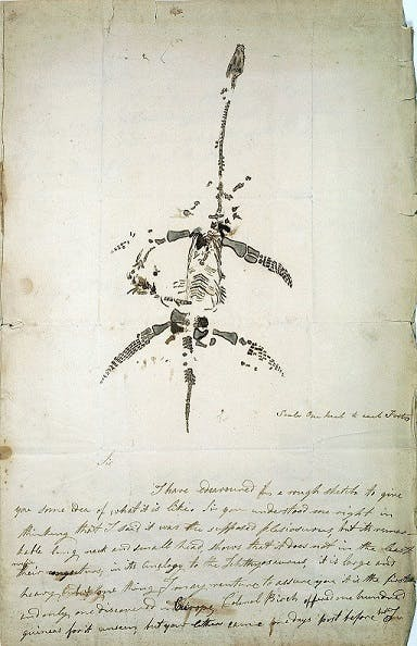 Autograph letter concerning the discovery of plesiosaurus, from Mary Anning, 1823.