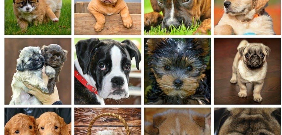 famous-dogs-quiz