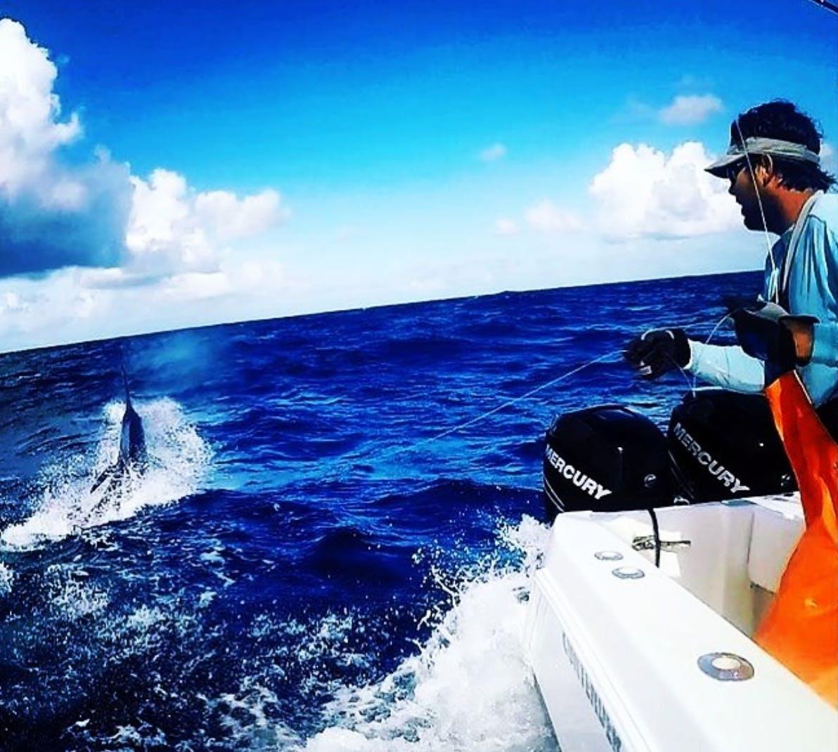 Vincent au lignage d'un superbe marlin bleu