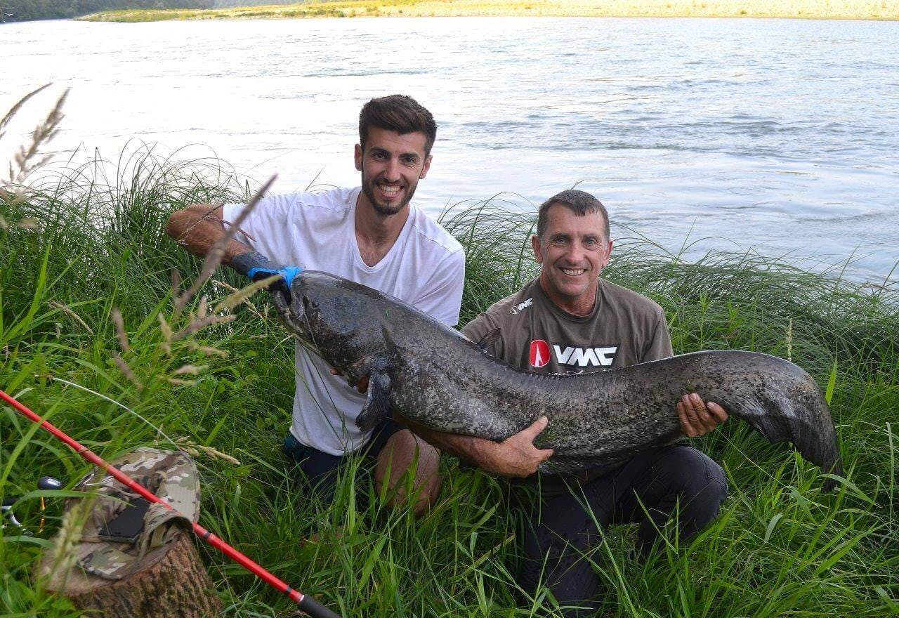 Bien que certaines époques soient préférables, le silure peut se pêcher toute l'année