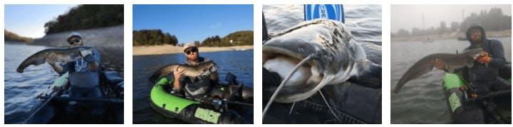 Quelques silures pêchés avec la canne DAIWA PROREX XR LEURRE BAIT CASTING