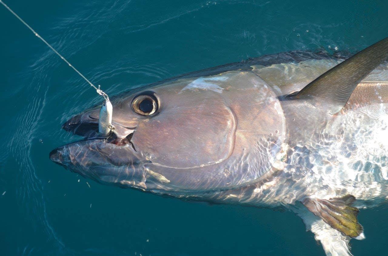 Habitats et postes pour pêcher le thon rouge
