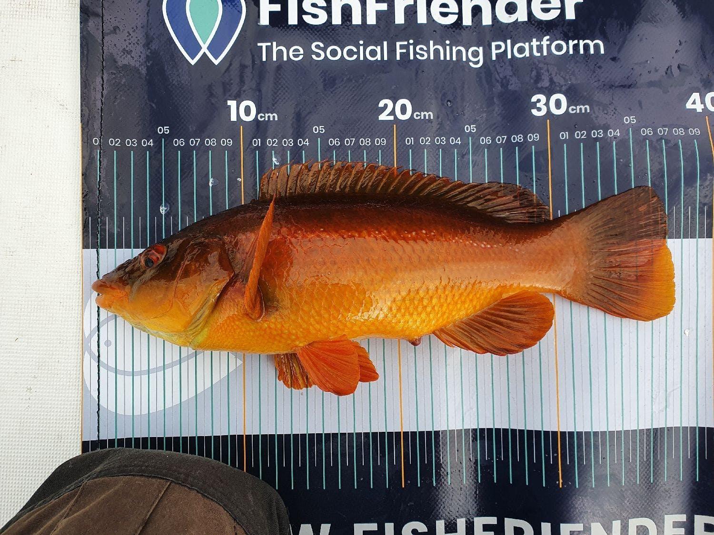 Quel que soit l'objectif, mesurer un poisson deviendra vite un réflexe