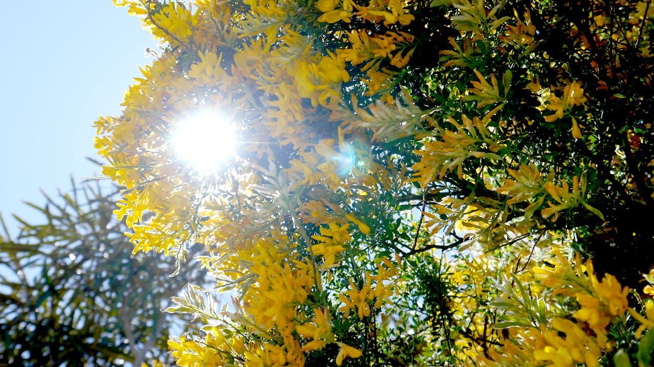 キラキラと輝く黄色い花
