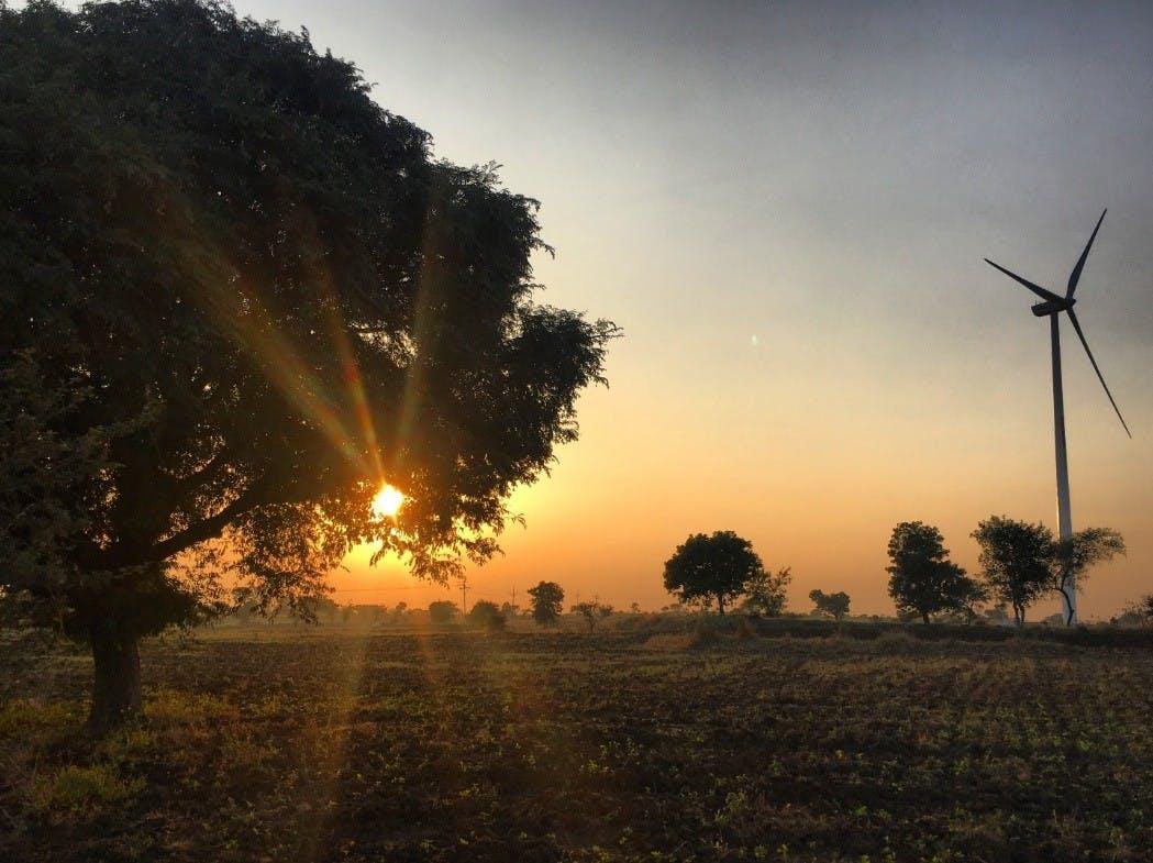 Baum bei untergehender Sonne