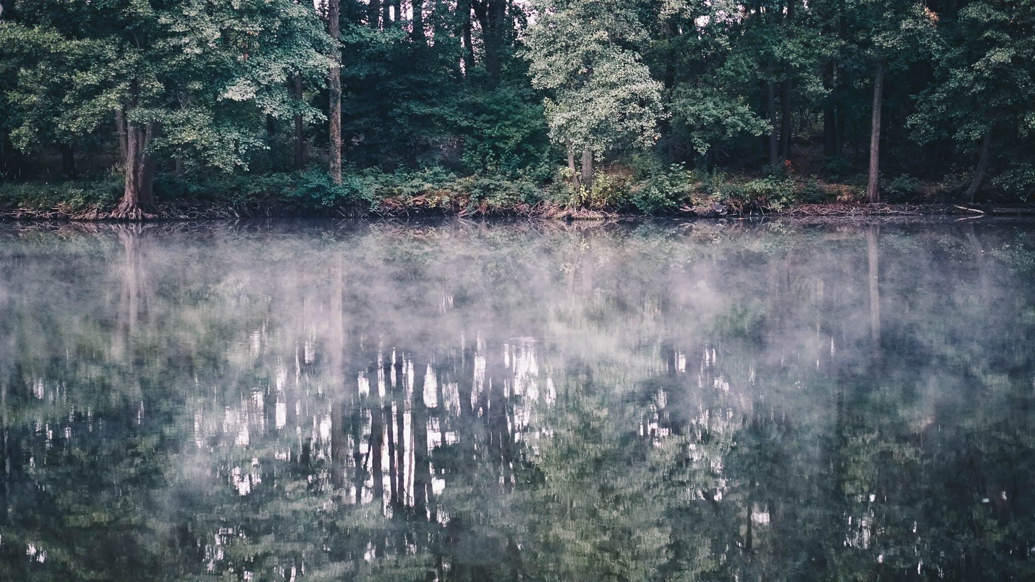 Blick auf See mit Nebel