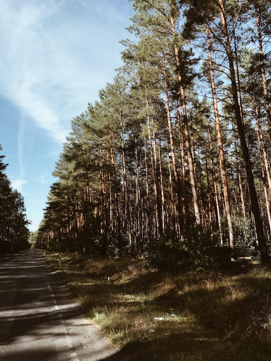 Wald und Straße