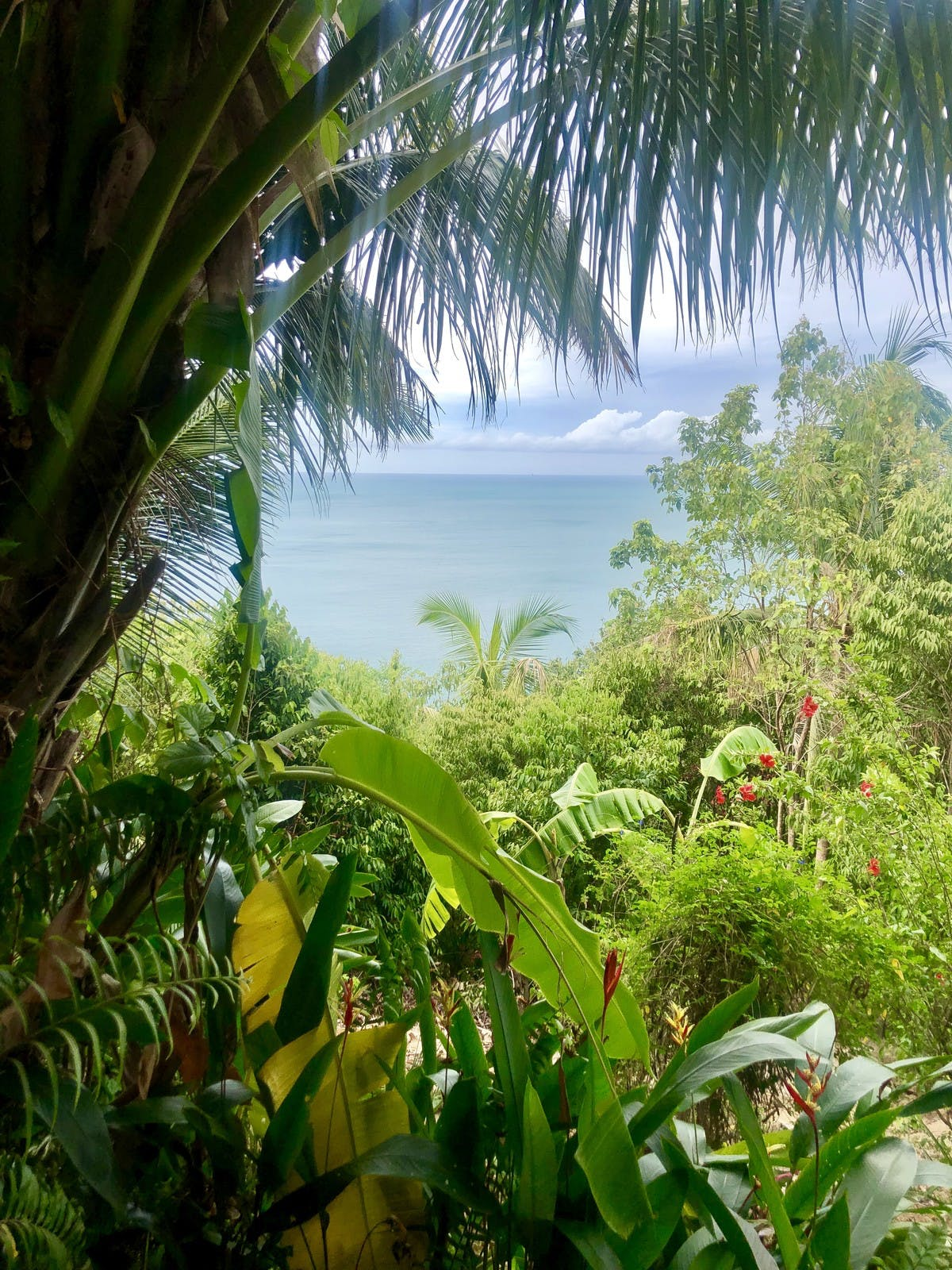 view of ocean from the jungle