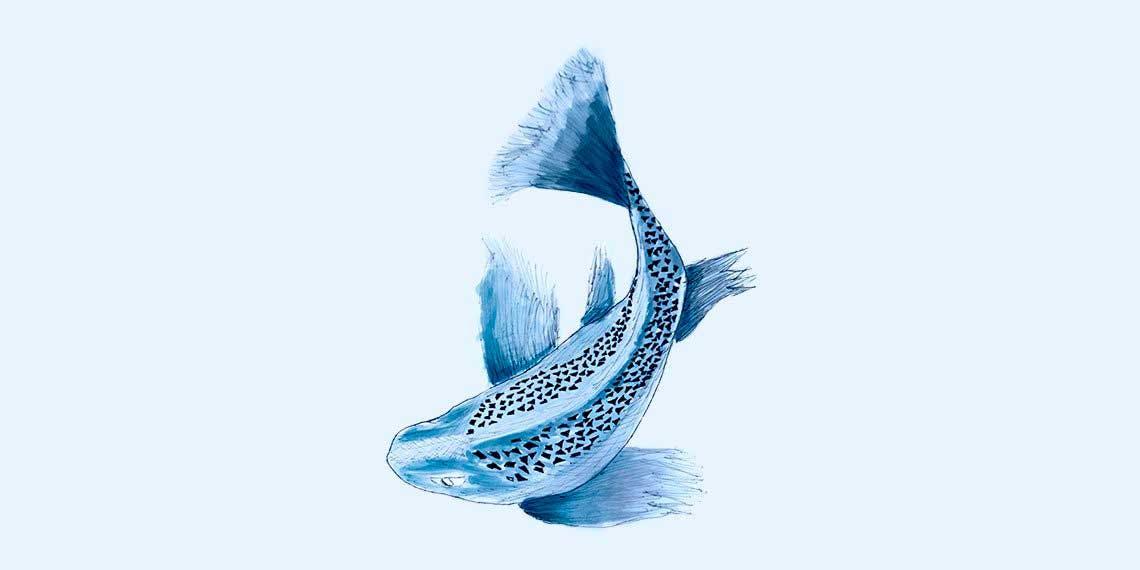 Garitma, pez nadando, dibujo marcador sobre papel