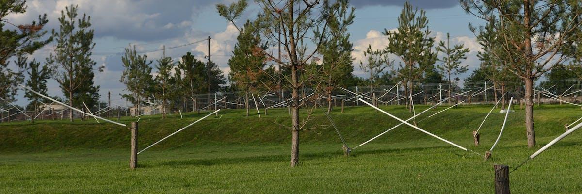 arbori si pini cu tutori plantati in parc