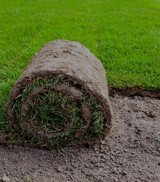 o rola de gazon natural decopertat la ferma