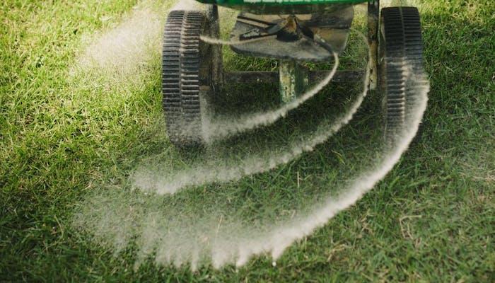 Cand fertilizam gazonul