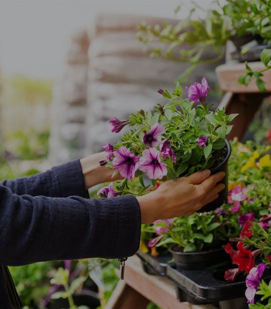 Servicii spații verzi pentru clienți