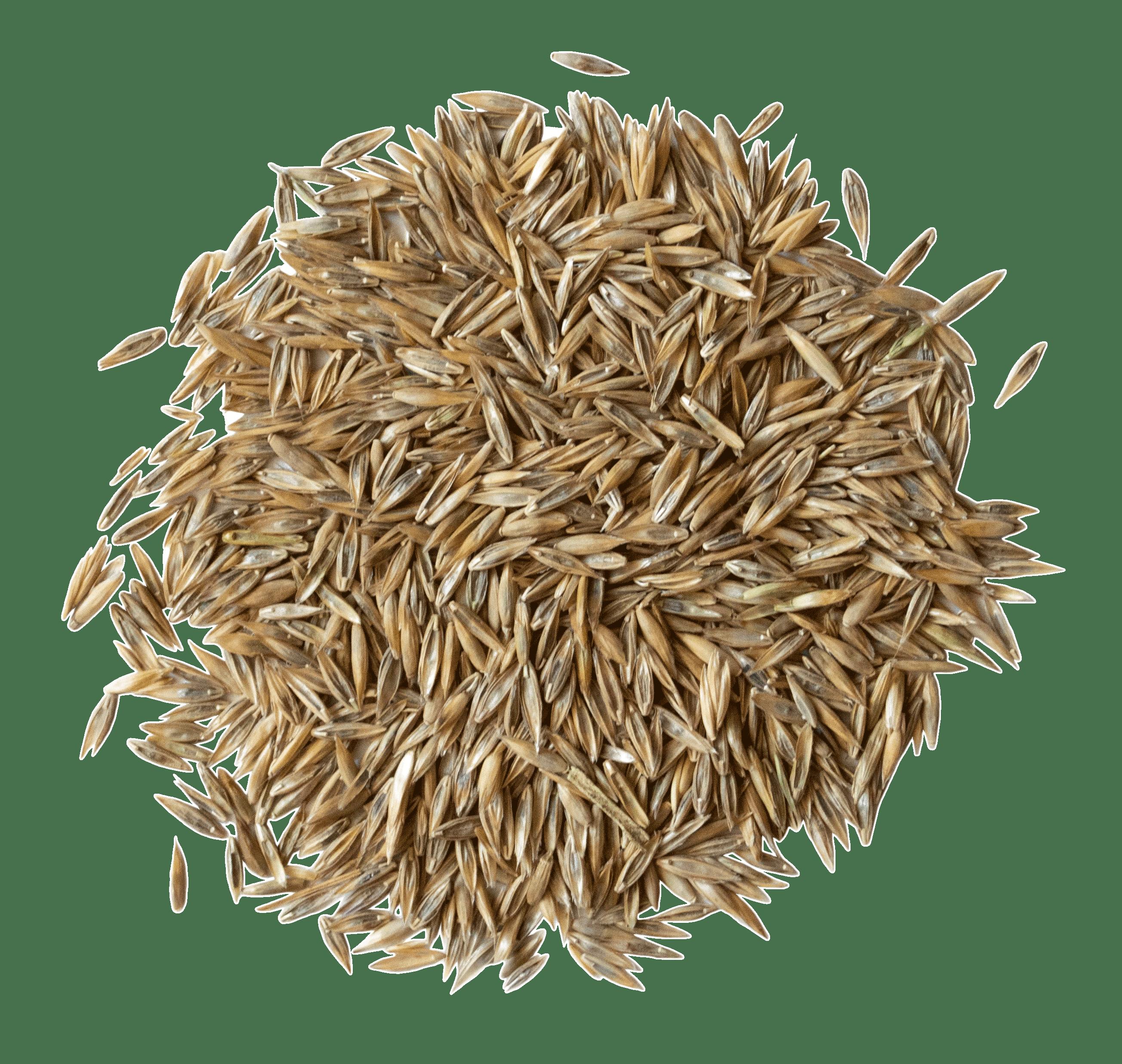 Amestec seminte de gazon