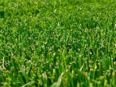 Gazonul Dej close-up gazon