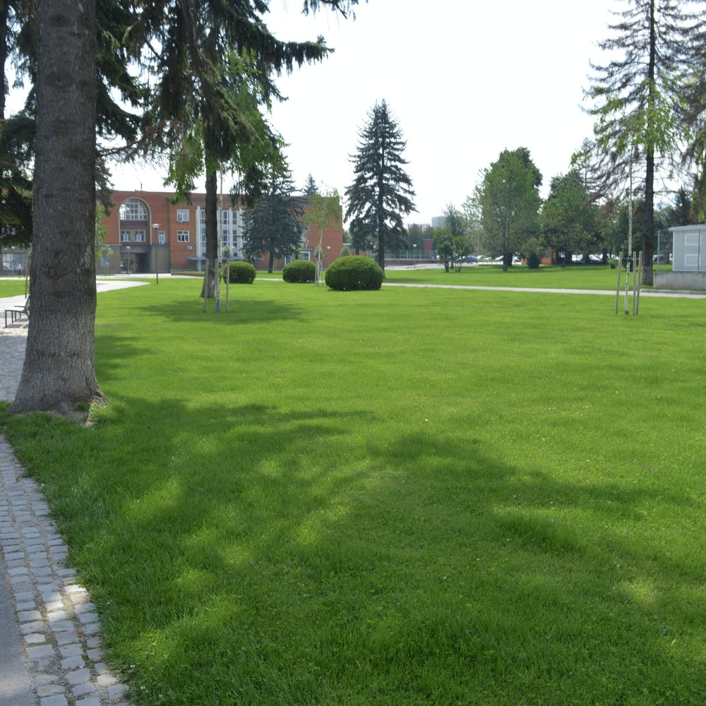 spatiu verde cu mult gazon si arbori de talie mare in zona industriala