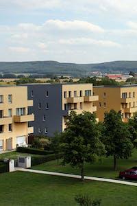 Servicii spații verzi pentru zone rezidențiale