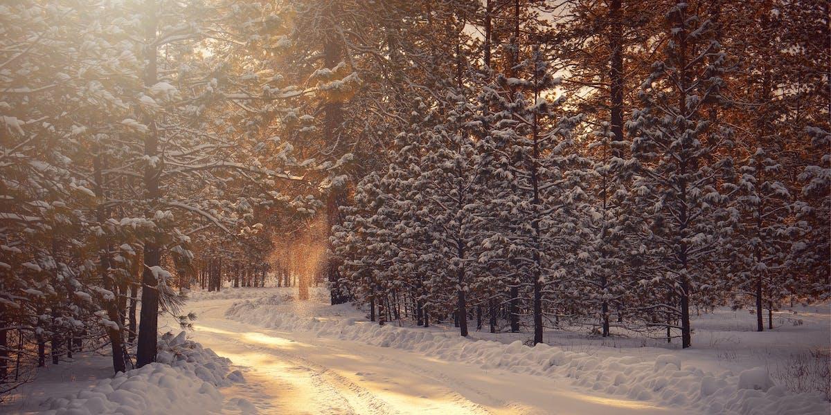 Ga naar buiten voor een mooie winterwandeling om je winterdip te verminderen