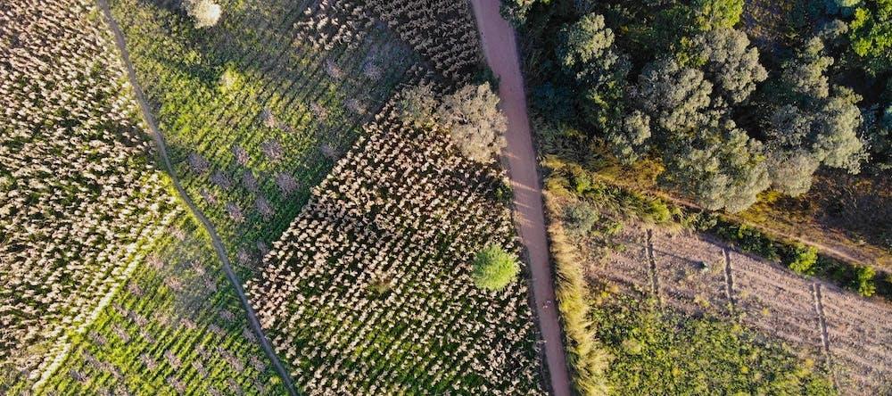 Field in Kasungu, Malawi