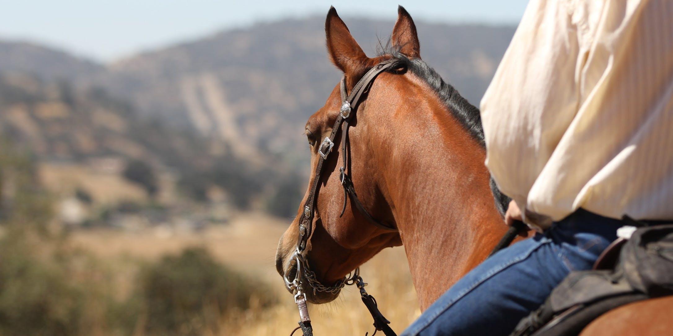 Horseback Riding Sun Valley