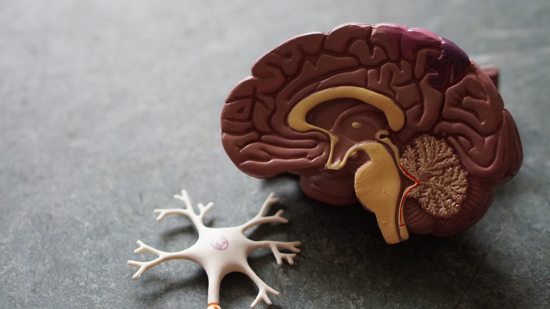 5 Tips for Reducing the Risk of Alzheimer's Disease